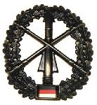 Insigna Bereta Trupe Aeriene